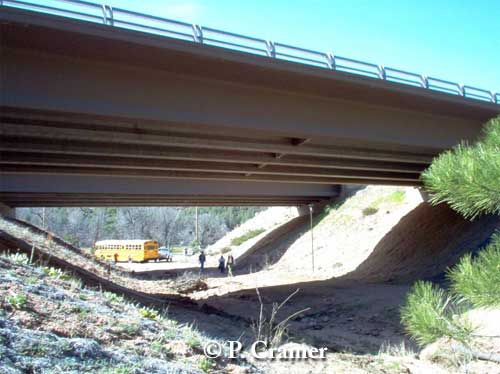 Arizona bridge underpass for elk, which have been documented using it thousands of times. Photo credit: P. Cramer.