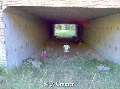 Idaho box culvert underpass. In first two years of monitoring, documented use by bear, moose, mule deer, bobcat and other species, but not used by elk. Photo credit: P. Cramer.