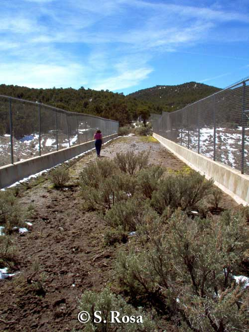 Wildlife overpass (7 m wide) Beaver, Utah. Note mule deer path in foreground. Photo credit: S. Rosa.