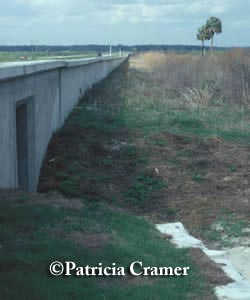 Florida's Paynes Prairie Wildlife wall and underpasses along SR 441.